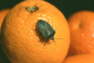 Arancio e verde  (Maria Corbelli)